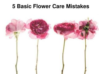 5 Basic Flower Care Mistakes