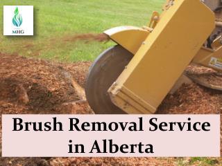 Brush Removal Service in Alberta