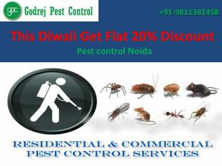 This Diwali Get Flat 20% Discount from pest control Noida