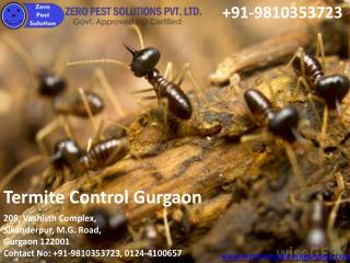 Termite treatment in Greater Noida
