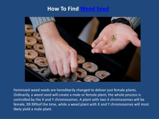 How To Find Weed Seed