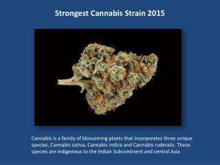 Strongest Cannabis Strain 2015
