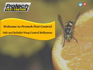 Safe and Reliable Wasp Control Melbourne