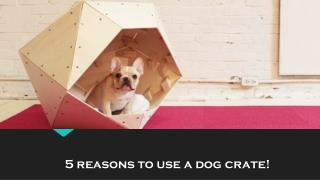 5 reasons to use a dog crate!