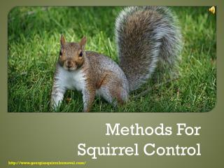 Methods for Squirrel Control