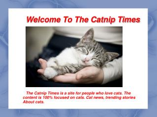 Discover Best Way to Care for your Cat