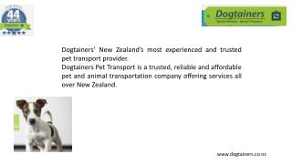 Pet transportation airline