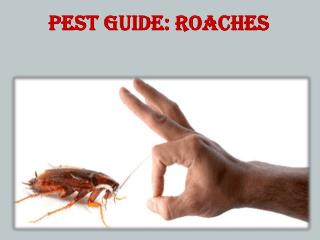 Pest Guide:Roaches