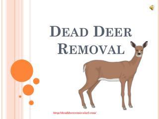 Removal of Dead Deer in Atlanta