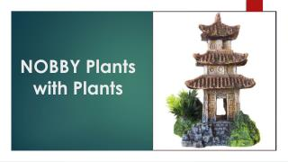 NOBBY Plants with Plants