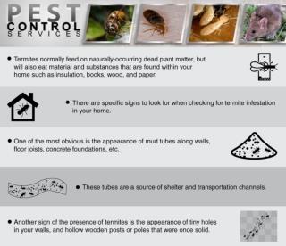 Termite feeding habits
