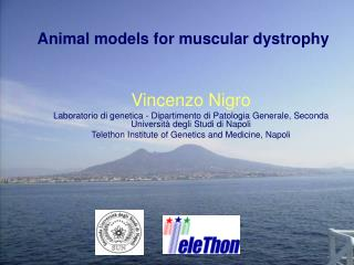 Animal models for muscular dystrophy