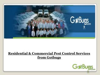 Residential & Commercial Pest Control Services from Gotbugs