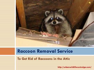 Get Rid of Raccoons