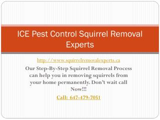 Ground squirrel pest control |Squirrel Removal Experts