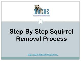 Professional squirrel removal experts| Step by-step squirrel removal process