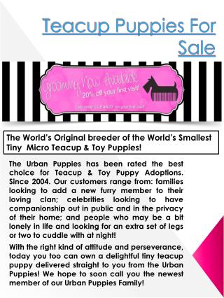 Teacup Puppy Tips Los Angeles