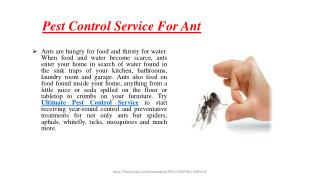Pest Control Services For Ant