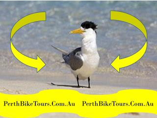 Swan Valley Tours - PerthBikeTours.Com.Au