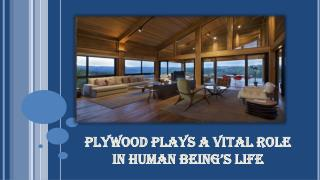 Plywood plays a vital role in human being�s life