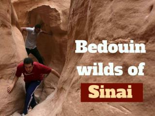 Bedouin wilds of Sinai