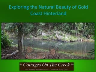 Exploring the Natural Beauty of Gold Coast Hinterland