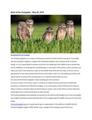 Birds of the Everglades - Miami Discount Tours