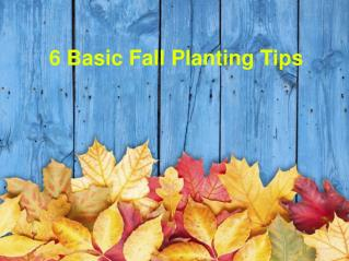 6 Basic Fall Planting Tips