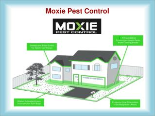 Pest Control Chandler