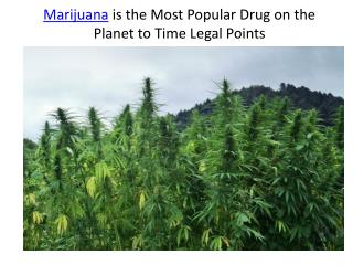 Marijuana is the Most Popular Drug on the Planet to Time Legal Points