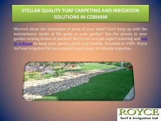 STELLAR QUALITY TURF CARPETING AND IRRIGATION SOLUTIONS IN COBHAM