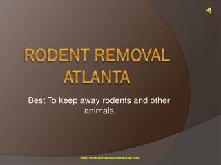 Removal of Rodent in Atlanta