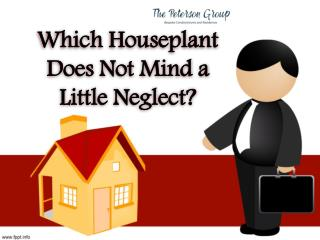 Which Houseplant Does Not Mind a Little Neglect?