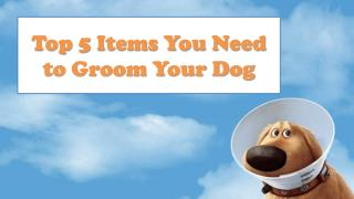 Top 5 Items You Need to Groom Your Dog