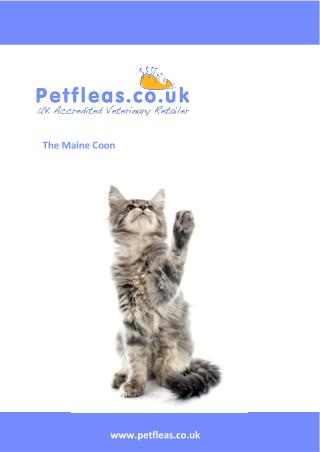 Cat Breeds: The Maine Coon