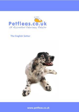 Dog Breeds: The English Setter
