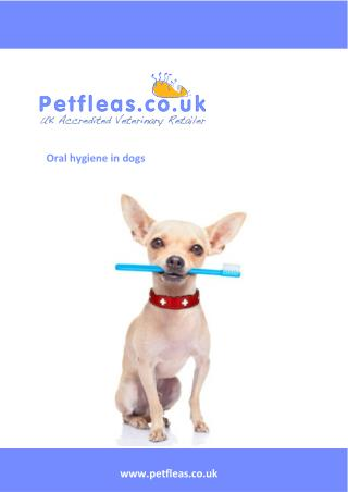Oral Hygiene for Dogs