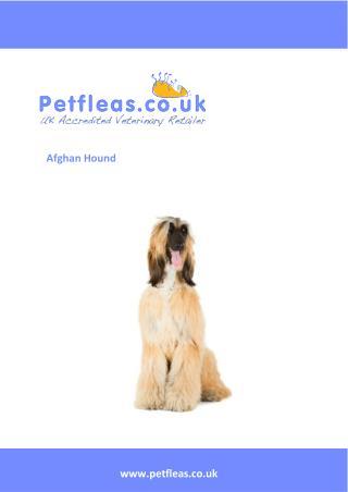 Dog Breeds: The Afghan Hound
