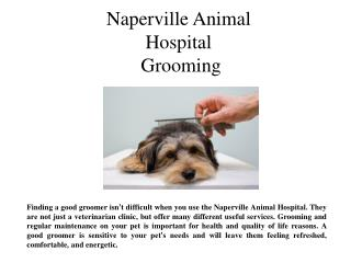 Naperville Animal Hospital Grooming