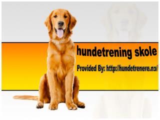 Hundeskole: La hunden din bli mannered i samfunnet