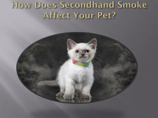 How Does Secondhand Smoke Affect Your Pet?