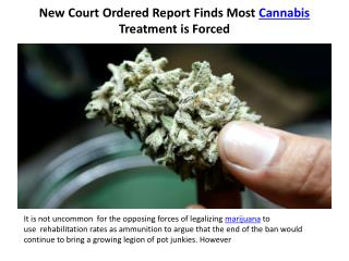 New Court Ordered Report Finds Most Cannabis Treatment is Forced
