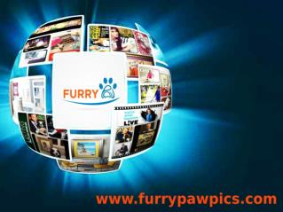 Furry Paw Pics- Custom Pet Art & Portraits
