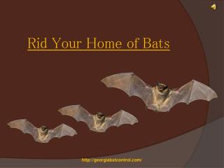 Rid Your Home of Bats