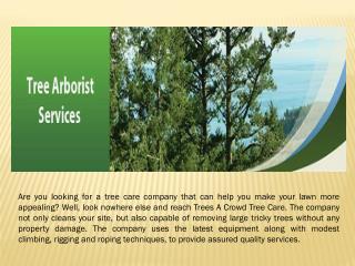 perth arborist services