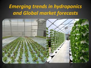 Emerging Trends in Hydroponics and Global Market Forecasts