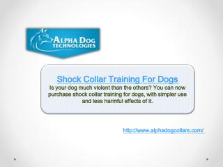Shock Collar Training For Dogs