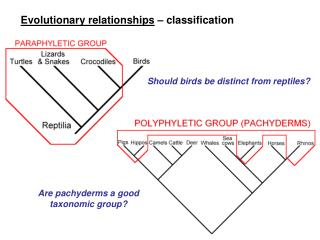 Evolutionary relationships   classification
