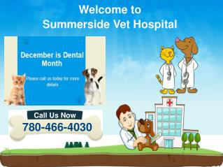Dog/Cat Dental Cleanings & Oral Surgery in Edmonton