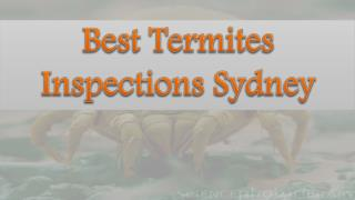Best Termites Inspections Sydney